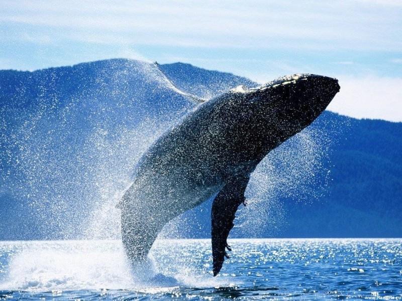 Япония оставит китов в покое