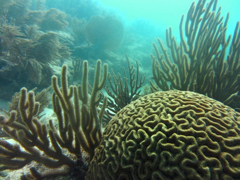 Что прячется на дне морском?