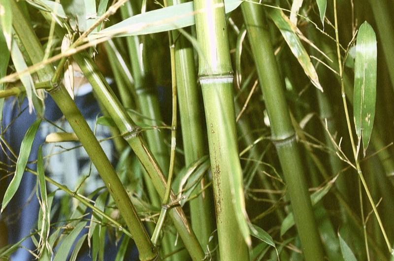 Уникальные жалюзи из бамбука украсят любой дом