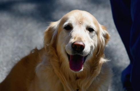 Собаке для счастья надо мало