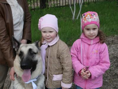 Большая собака может быть милой — доказано овчарками!