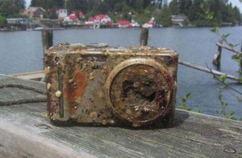 Камера стала домиком для рыб