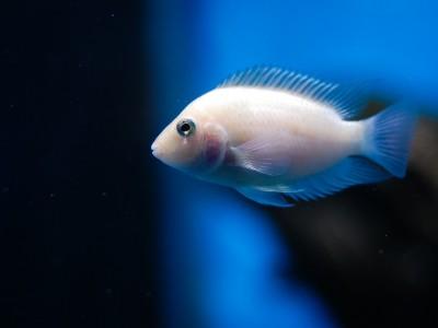 Египтяне не едят рыбу
