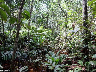 Неизвестная территория, Конго