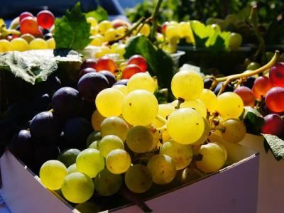 Природный фермент позволит сохранять фрукты свежими надолго