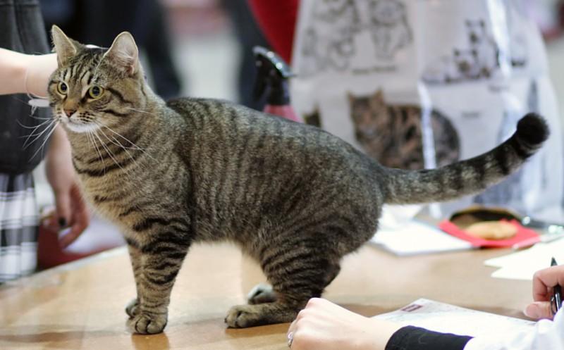 В Пскове проведут выставку бездомных кошек