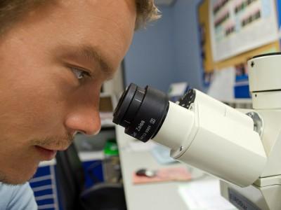 Организм с измененной ДНК создали ученые