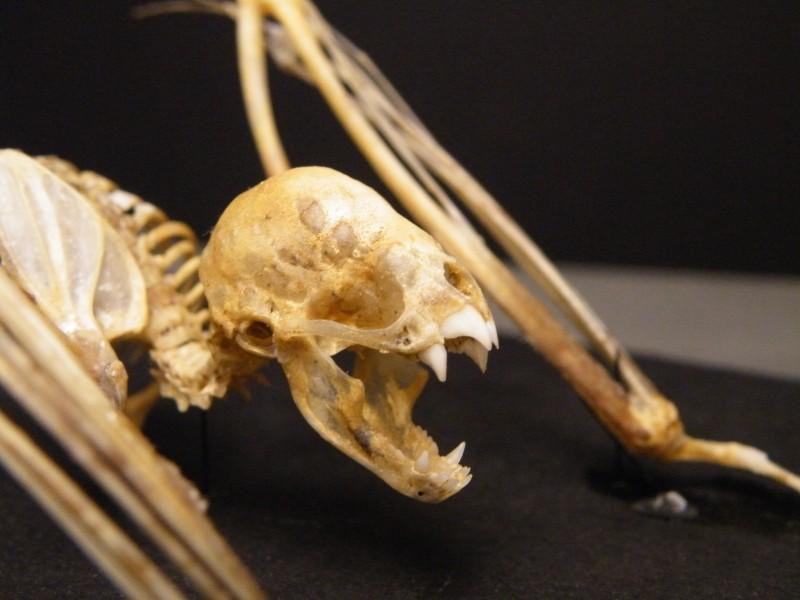 Ученые раскрыли секрет вампиров