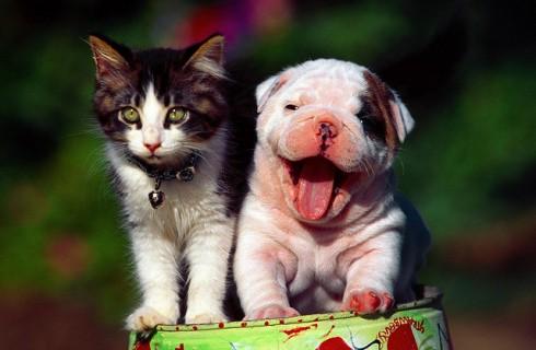 5 доводов в пользу домашних животных