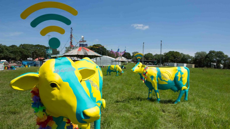 Коровы раздают Wi-Fi