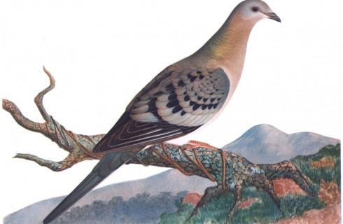 Ученые обратят вспять вымирание видов