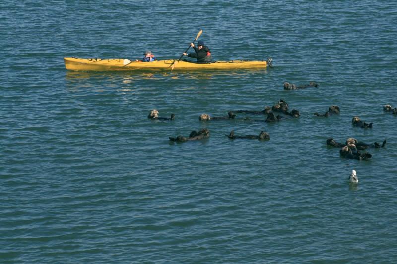 Способ выжить 83 дня в открытом море на каяке