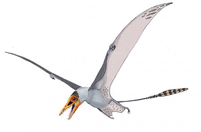 В Китае нашли крылья птерозавров