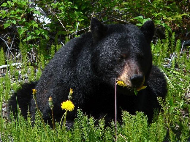 Чем обедает медведь