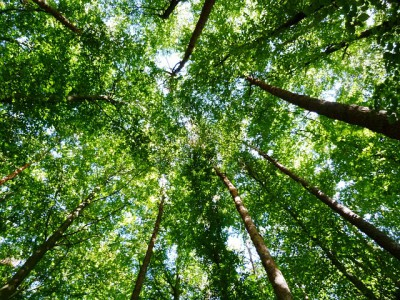 Программа по озеленению