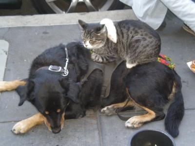 Хозяева кошек оказались намного умнее, чем собаководы