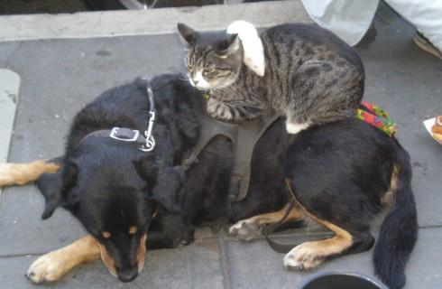 Хозяева кошек умнее хозяев собак