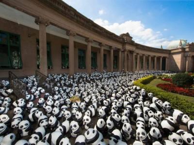 Панды в Гонконге