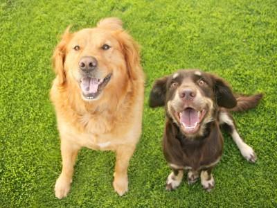Определить рак помогли собаки