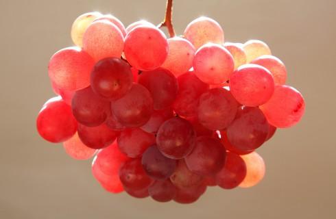 Виноград за 5400 долларов