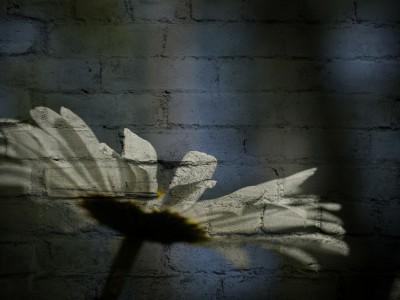Изображение на стене
