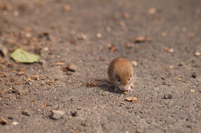 Денежная мышь принесет благополучие
