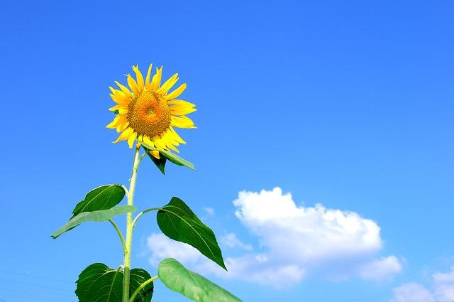 Воздух играет важную роль в жизни человека