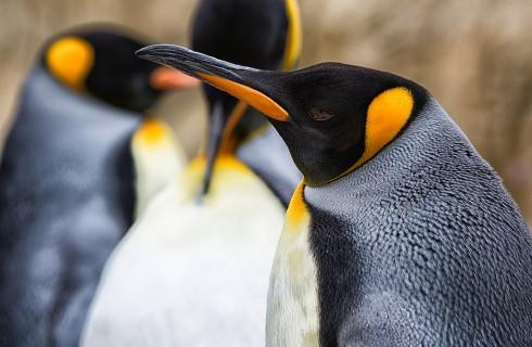 Ученые говорят с пингвинами