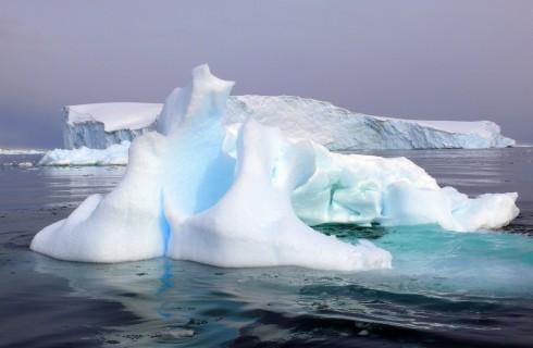 В Антарктиде нашли новую жизнь