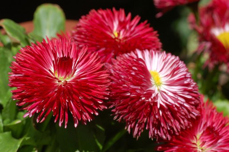 Идеальные цветы для свадебных хлопот