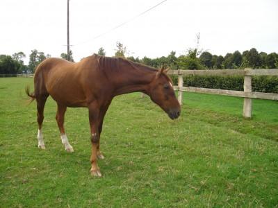Уши лошадей- важный элемент общения