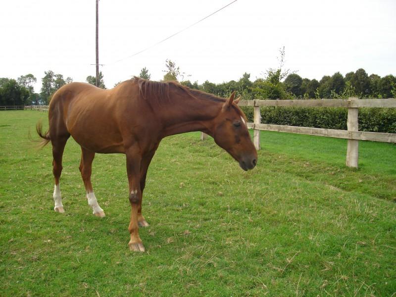 Лошади общаются с помощью глаз и ушей