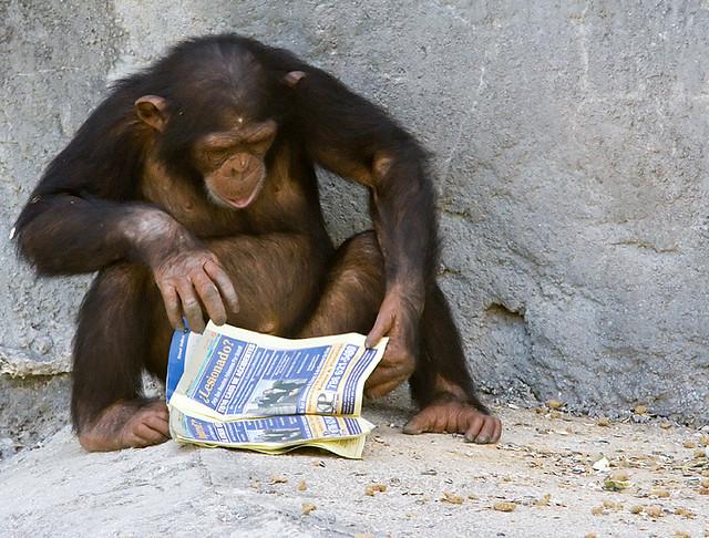 Шимпанзе разоблачили
