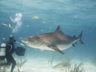 Распространения бактерий можно избежать используя Sharklet