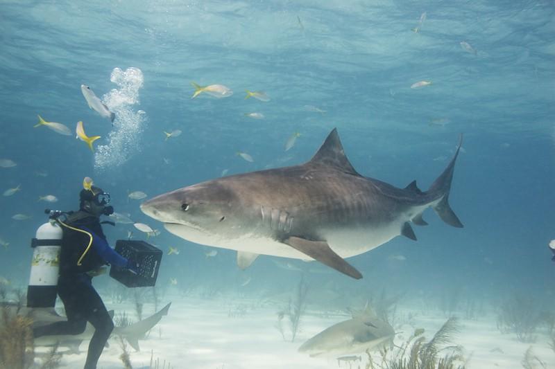 Акулы вдохновили изобретателей