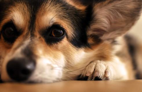 Ваша собака – пессимист