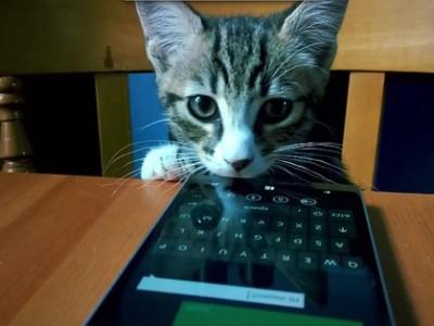 Котики продают новый смартфон Lumia 930