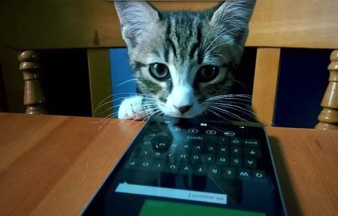 Продавцами продукции Microsoft стали котики