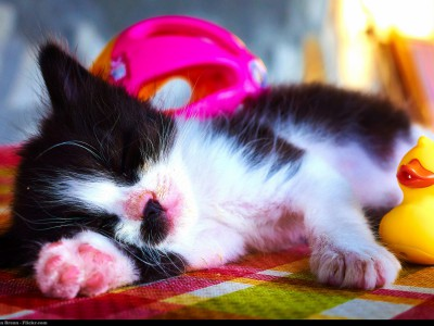 Продукты для сна помогут выспаться