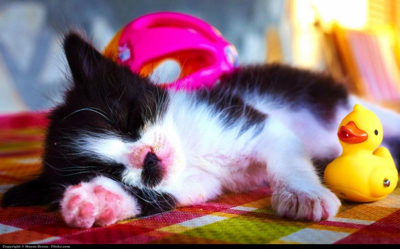 8 продуктов для хорошего сна