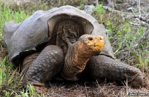 Гигантские черепахи показали настоящее чудо