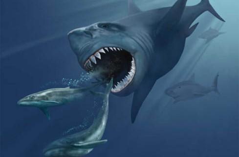 Вымершие мегалодоны влияют на жизнь современных животных