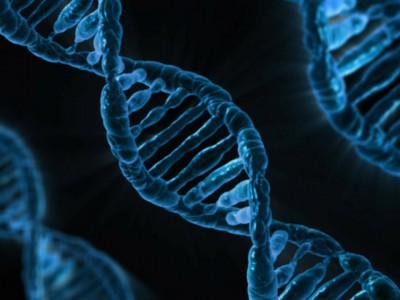 Ген в ДНК