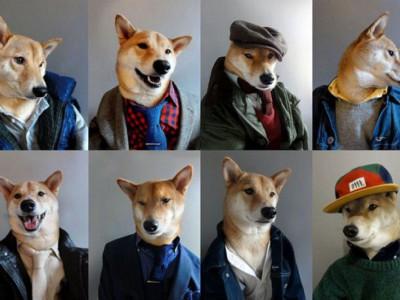Фотографии собаки Бодхи