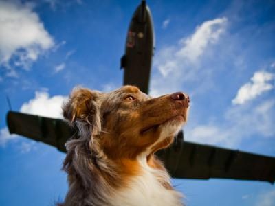 Перевозить животных в самолете нужно правильно