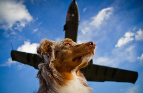 Как перевозить животных в самолете