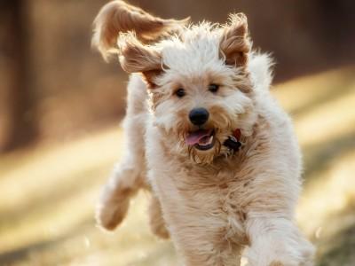Собаки помогают людям найти вечную молодость