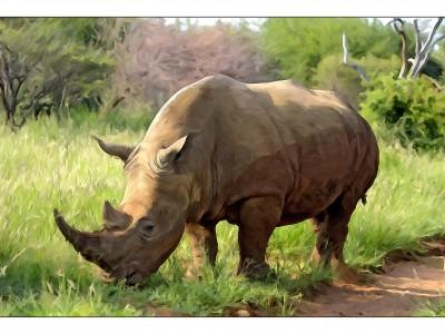 Носороги в зоопарках