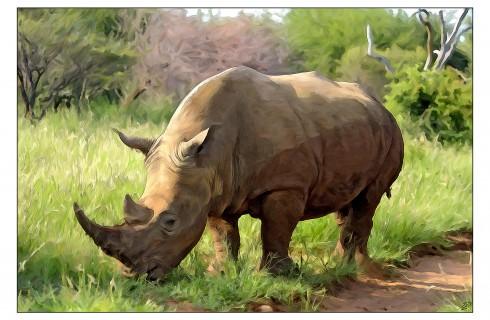 Носорогам помогут звуками