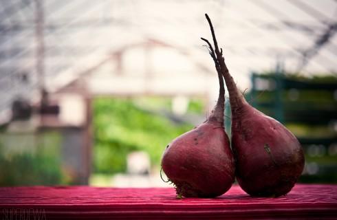 Растительный белок заменит кровь